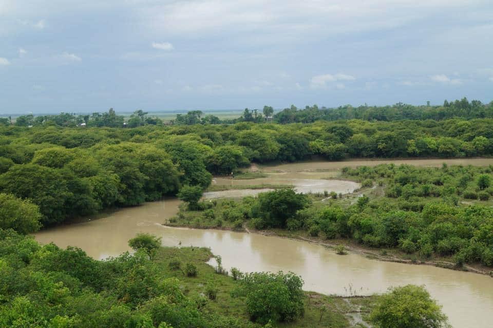 Ratargul Swamp Forest, Sylhet - Bangladesh