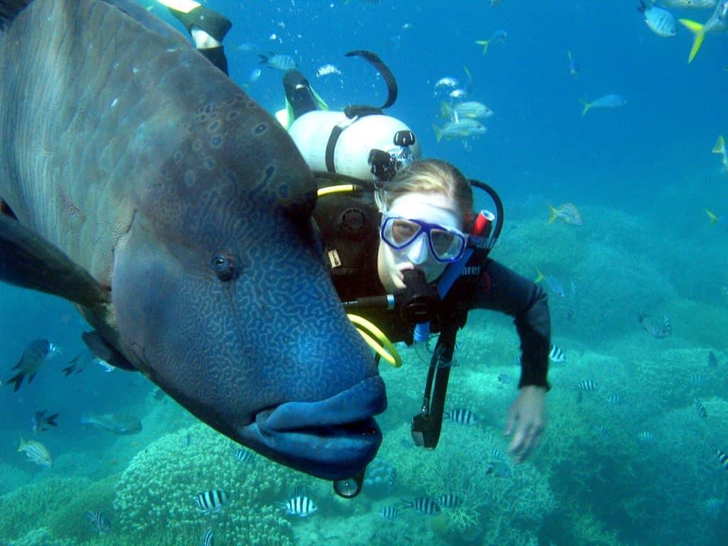 Bultkoppapegaaivis tijdens duik Australië