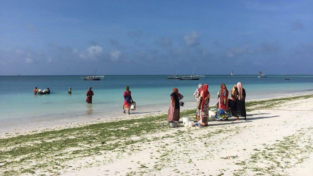 Vrouwen vissen op Zanzibar